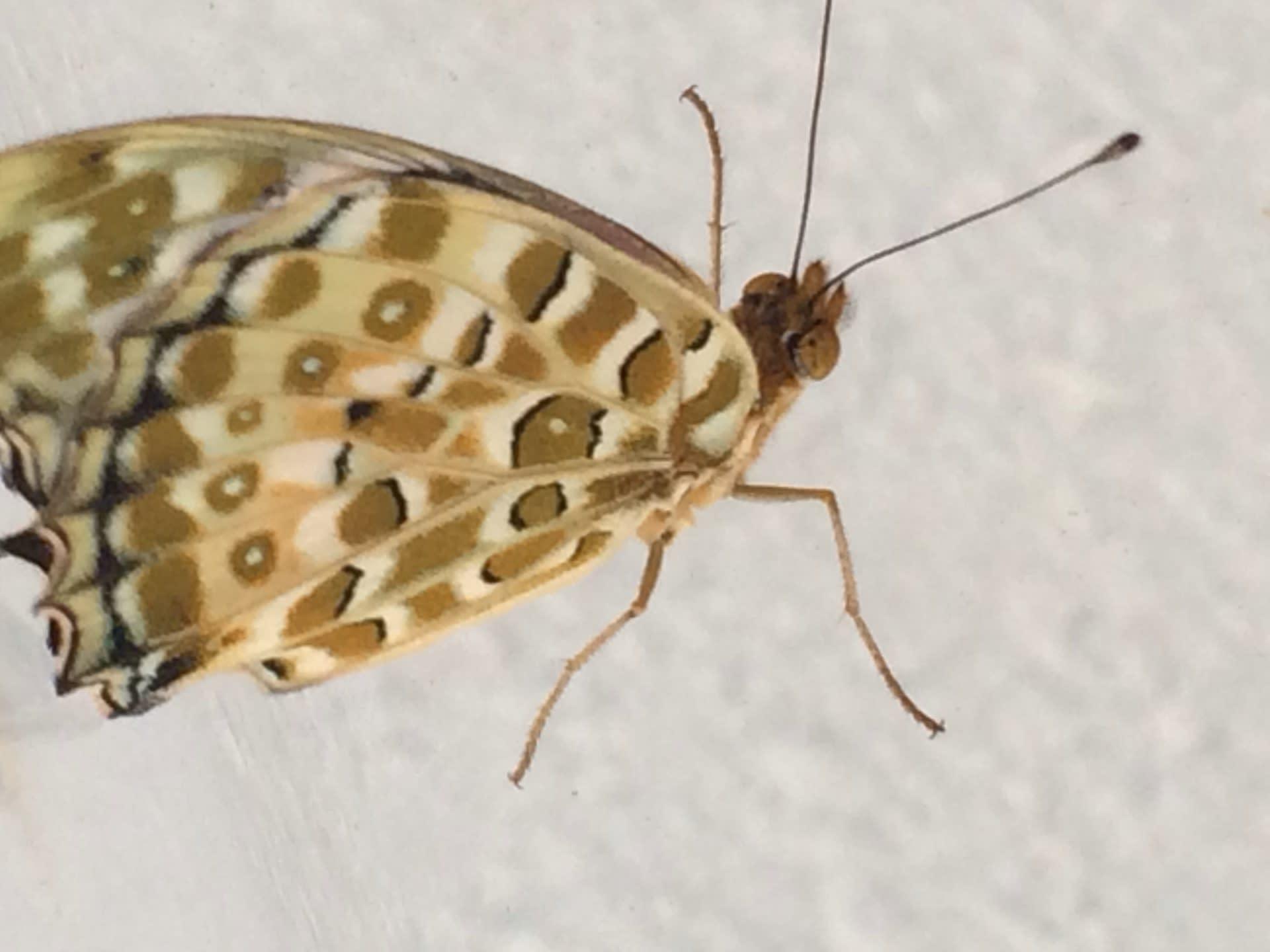 草花と昆虫、ツマグロヒョウモンなど - 写真と短い文章 2