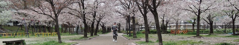 Jackie_with_cherry_blossoms_title