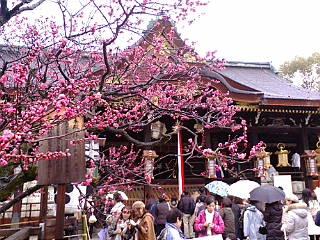 北野天満宮梅花祭に来ています