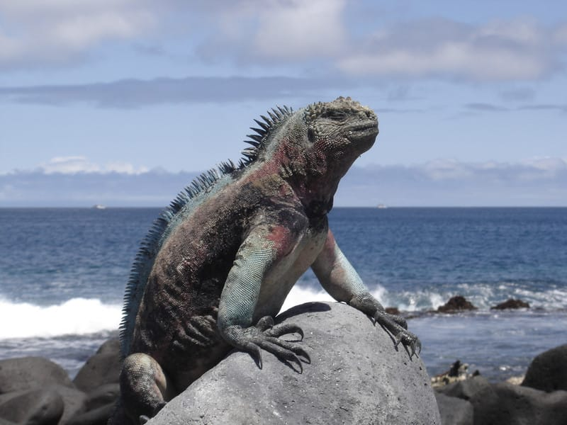 Galapagos_canodros_copyright_2012_i