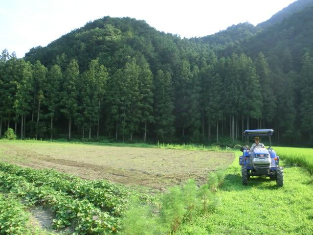 蕎麦畑を耕す