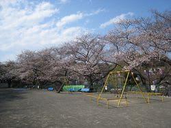 南郷公園の桜