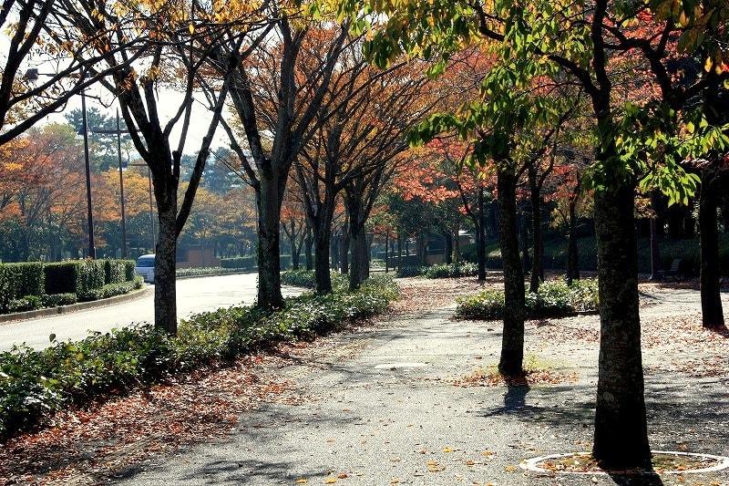 Parku131108