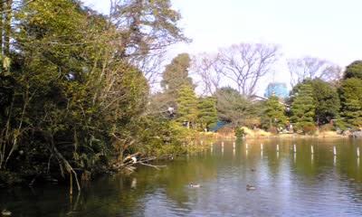 今年初めての善福寺公園