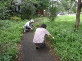 園路の草取り1