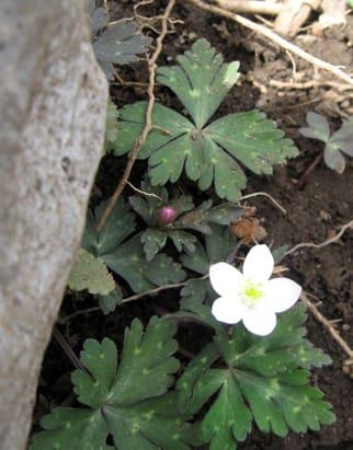 Flower02_2