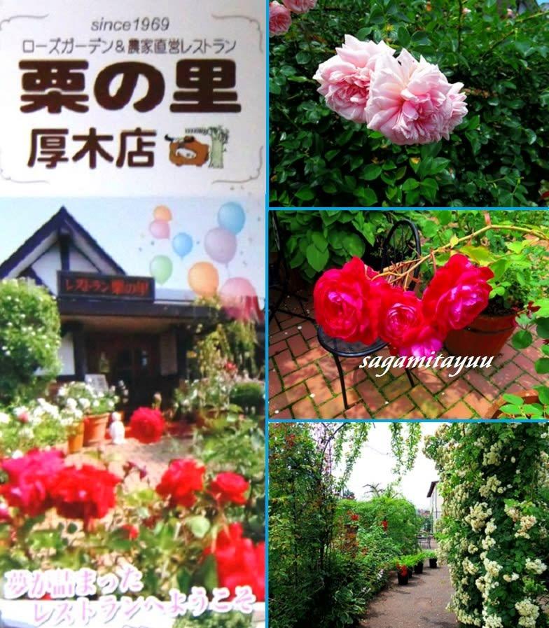 ガーデン 米沢 ローズ レストランローズガーデン クチコミ・アクセス・営業時間|米沢【フォートラベル】