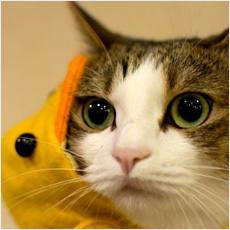 「愛猫がハマった玩具を教えてくれませんか?」の質問画像