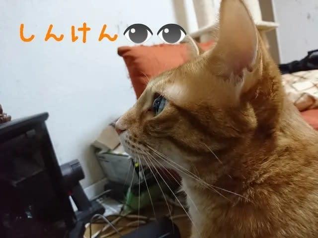 真っ直ぐテレビを見つめる