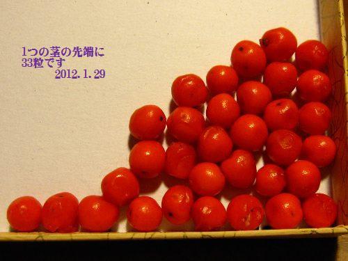 120129senryo2