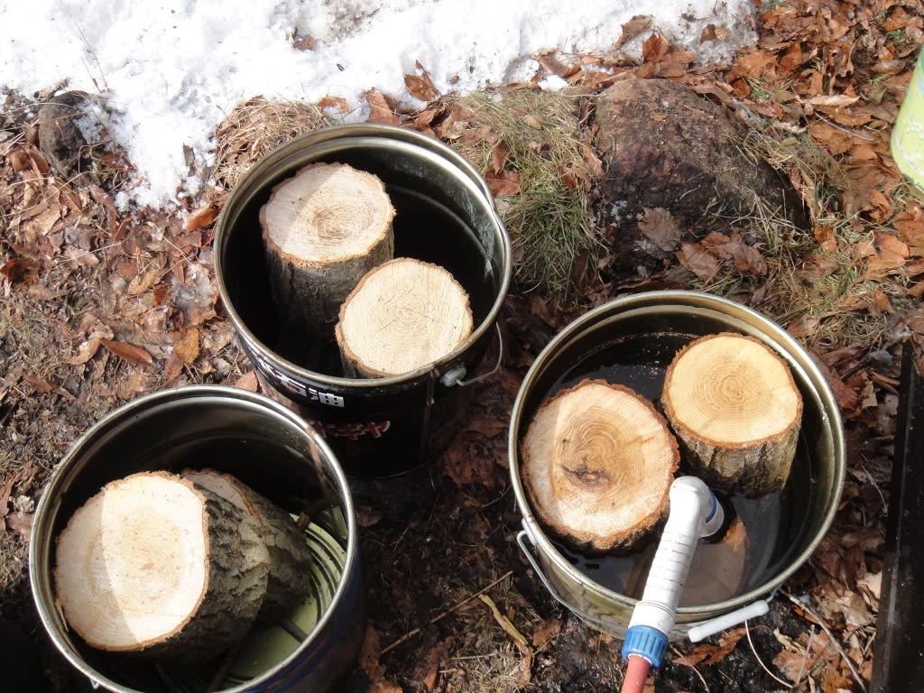 マイタケ原木作り
