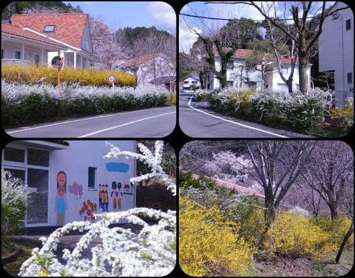 ねむの木村の春の風物詩 - 気ま...