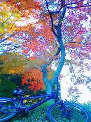 多摩湖の紅葉