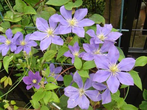 庭のお花その2