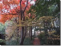 (2)紅葉(黄葉)の園路