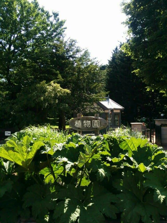 明治時代にクラークが「植物学の教育には植物園が必要だ」と助言したことから出来たこの植物園は、札幌の原始の姿を今に伝える貴重な教育・研究現場であると同時に、
