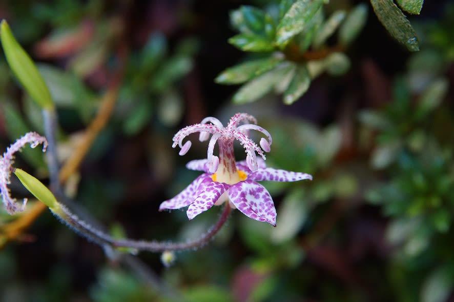 金剛山四季の花