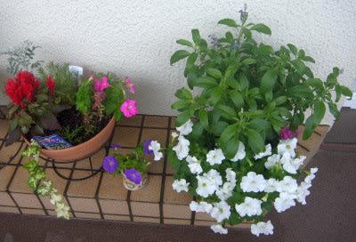 寄せ植え鉢-LとH