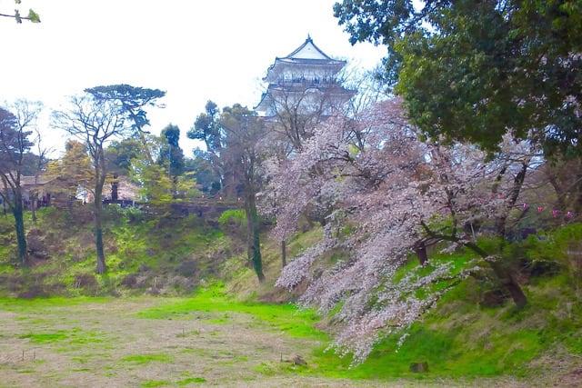 小田原城の桜2019/3/31午前現在 - あられの日記