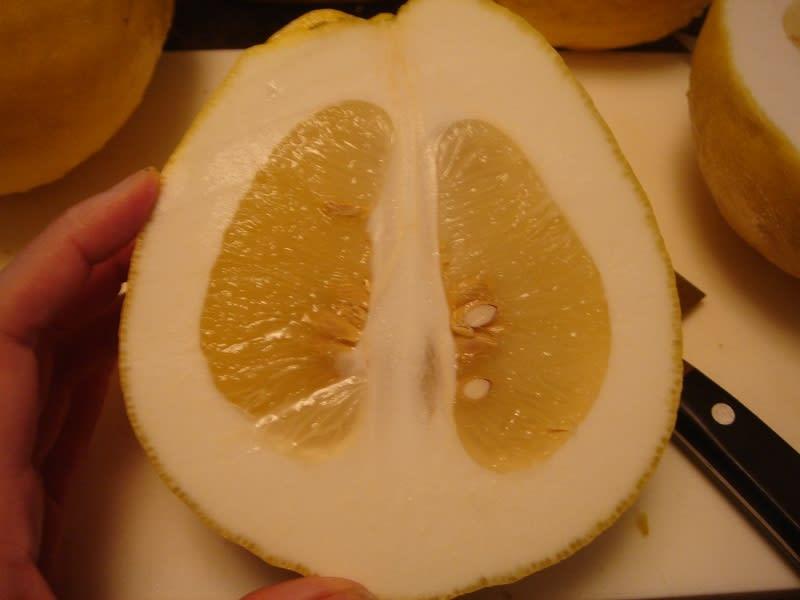 ポンデローサレモン