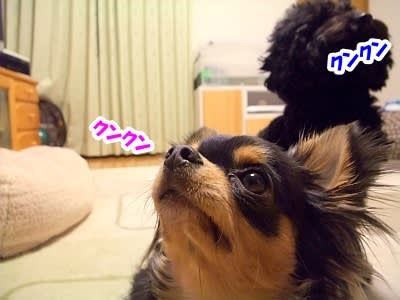 https://blogimg.goo.ne.jp/user_image/36/2d/50b9e0612baa0c30ceeb19aa57e7665e.jpg