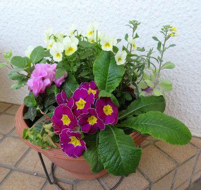 寄せ植え鉢-N 2021/04/07