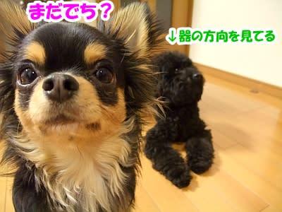 https://blogimg.goo.ne.jp/user_image/36/c7/5b437715a5c0ef64e9195ba1e2005859.jpg