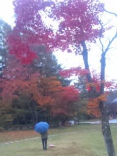 星の温泉の紅葉