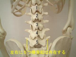 腰椎 横 突起 骨折