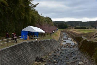 古田のカワヅサクラの場所