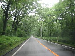 霧雨の那須の道