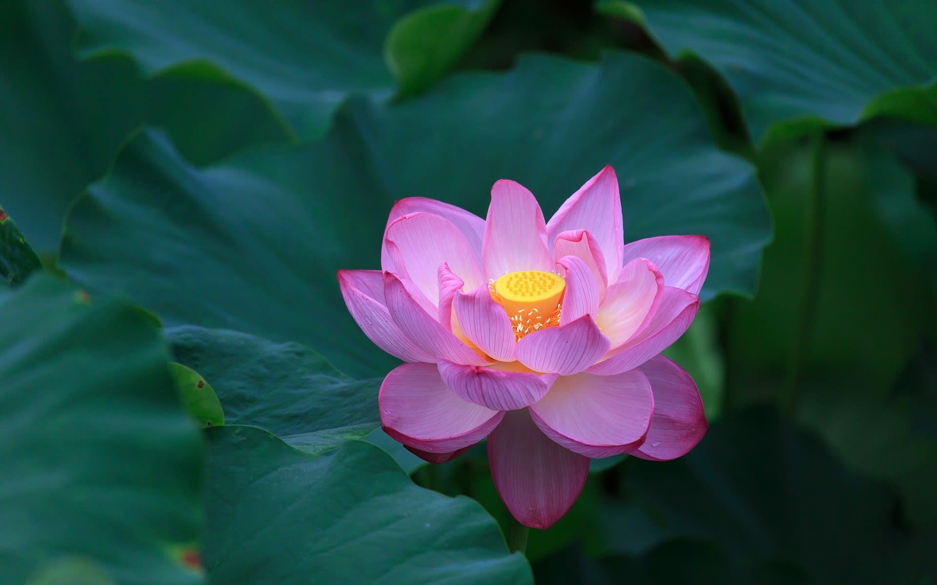 2016年夏の京都 東寺の壁紙その2 計17枚 壁紙 日々駄文