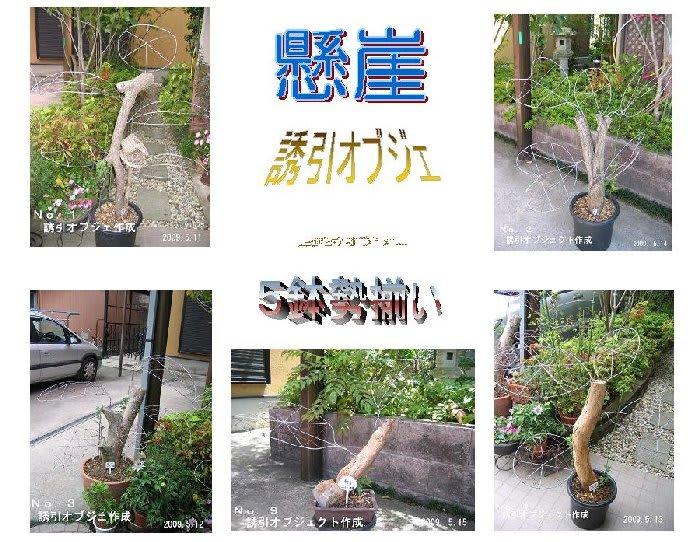 Kengai_yuuinobje20090517