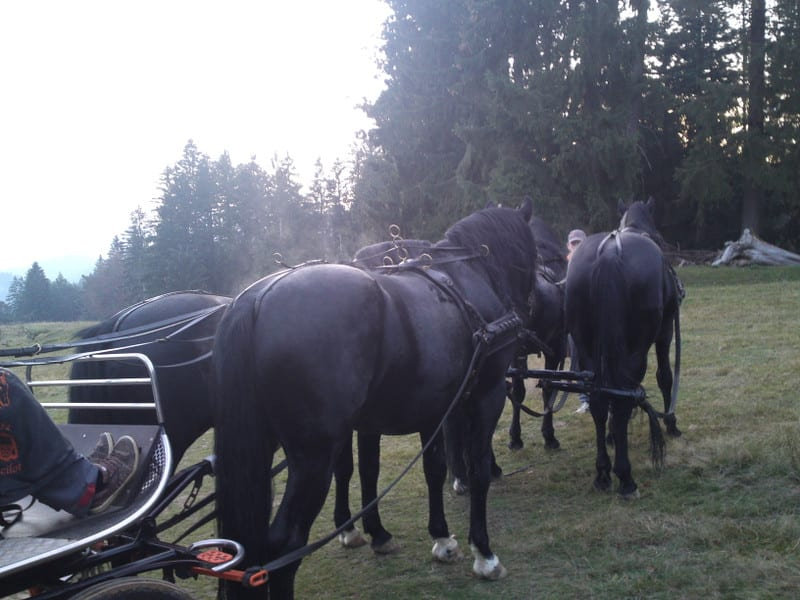 131103_horse11
