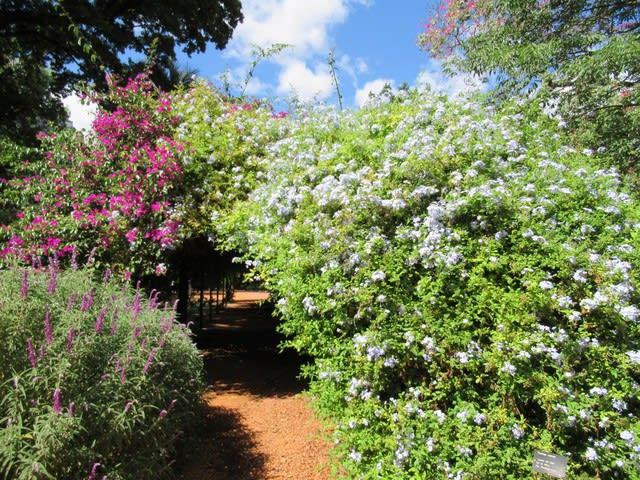金の頭とハチドリと植物園 - MOUNTAIN PEOPLE ~Life in Sasayama~