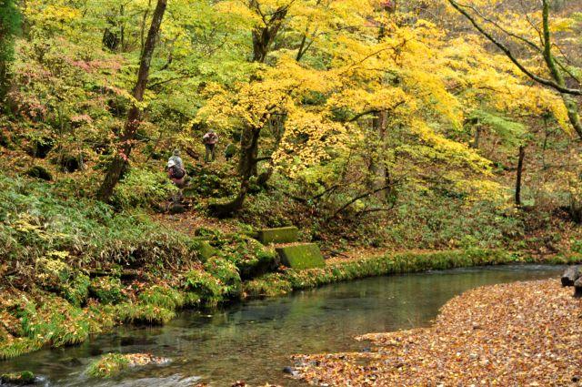 男池 鳴子川にて