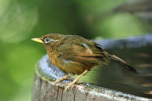 静かに鳥たちの生活を見る