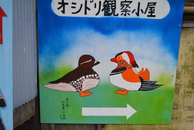 日野町のオシドリ観察 - 悦子の部屋