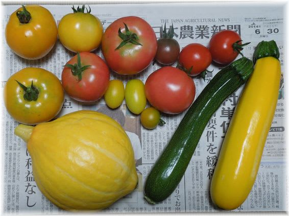 採れたて野菜 2014年6月30日