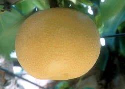 新プランター野菜養液栽培への誘い