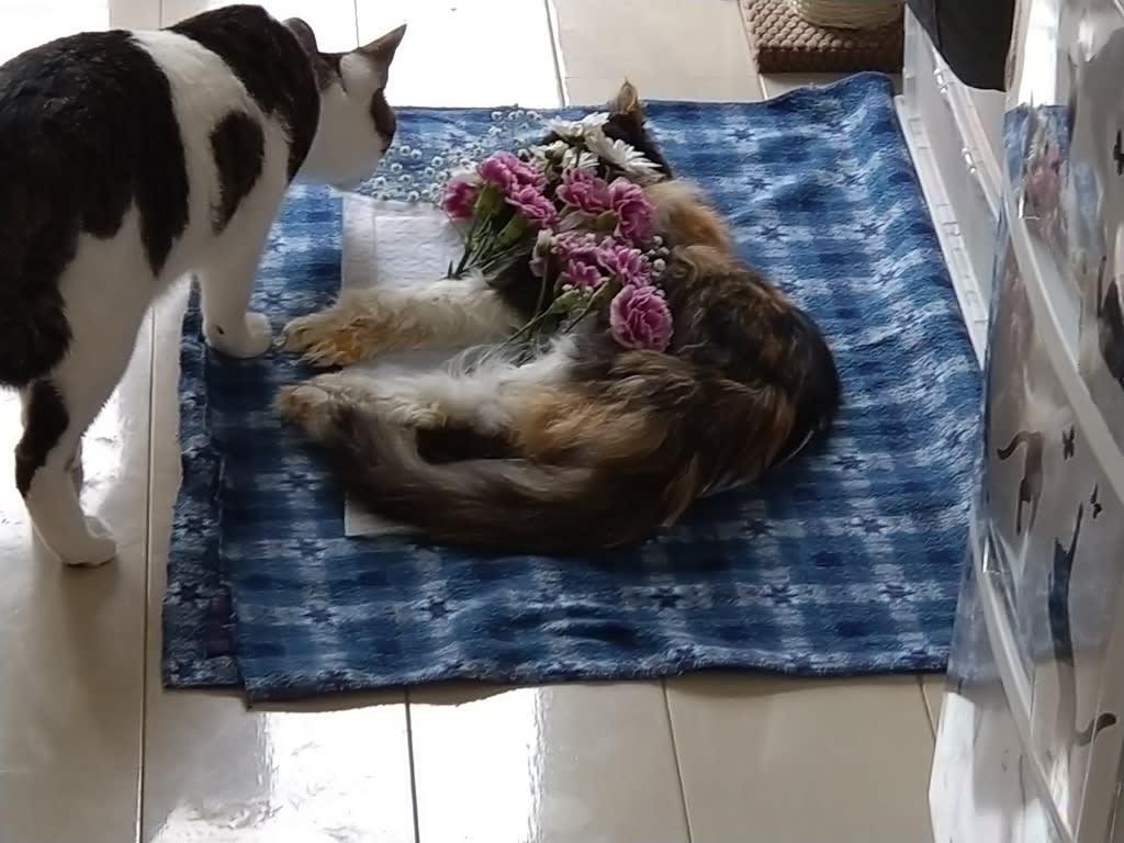 硬直 猫 死後