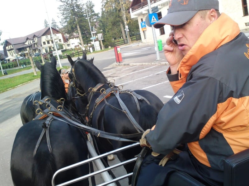 131103_horse08