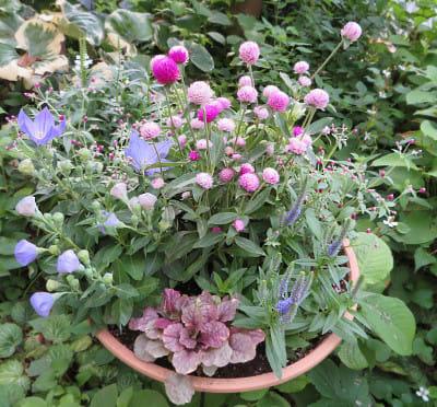 ピンクの濃淡が優しい雰囲気の寄せ植え鉢