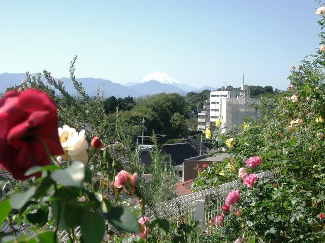 国分寺 薔薇