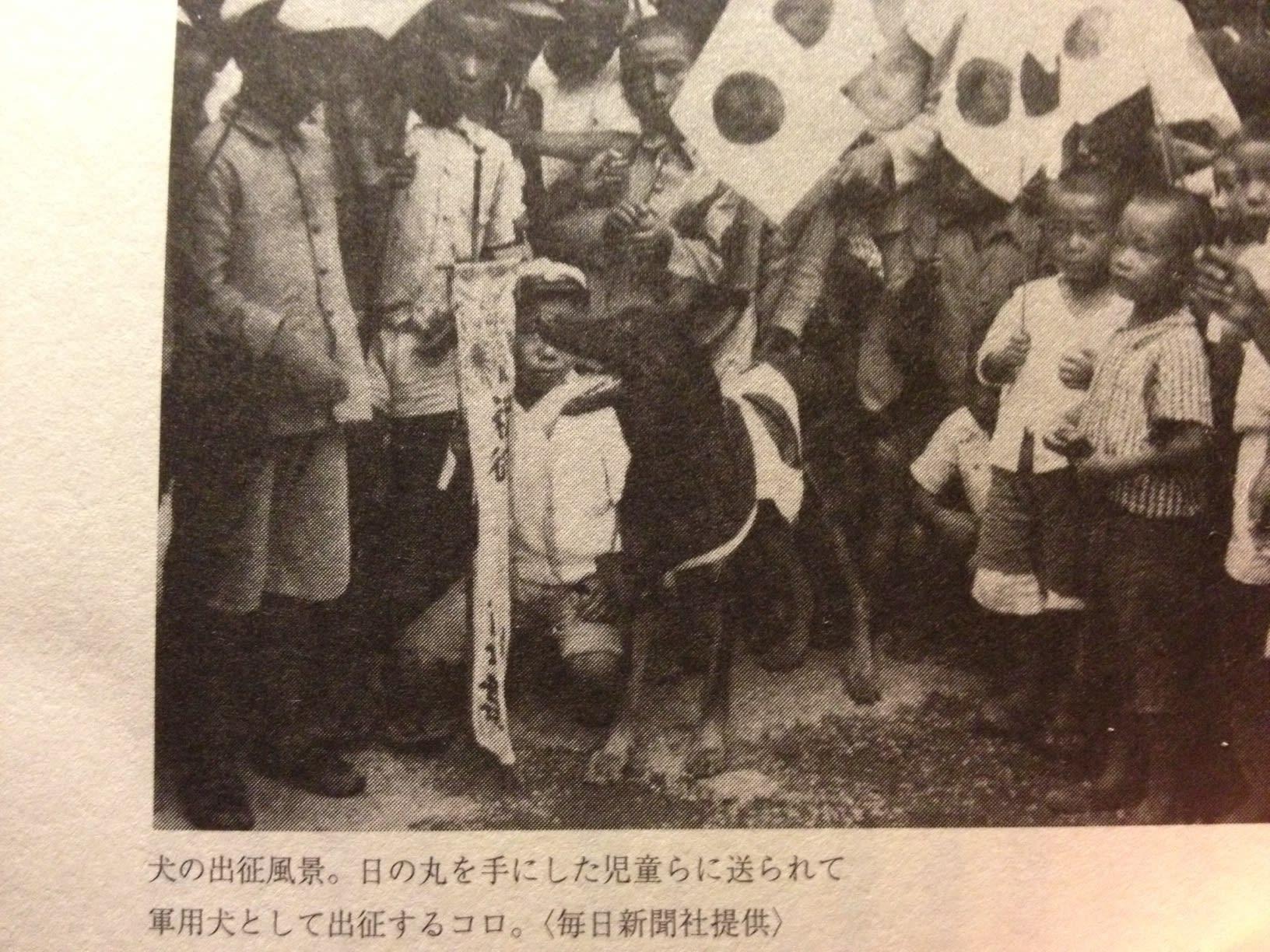 出征した犬達 - sombrero-record...
