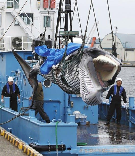 2019 07 02 沸く漁業者、消費者と温度差【保管記事】