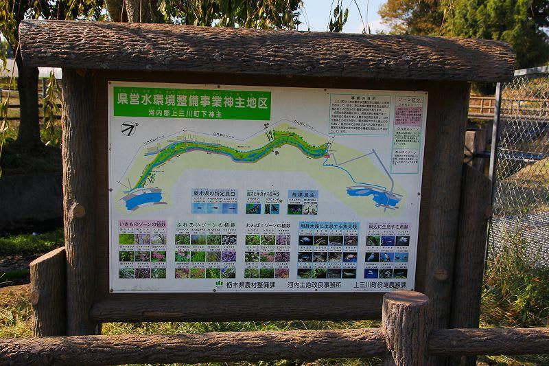 上三川町 県営水環境神主公園 24.10.26 - 栃木の木々