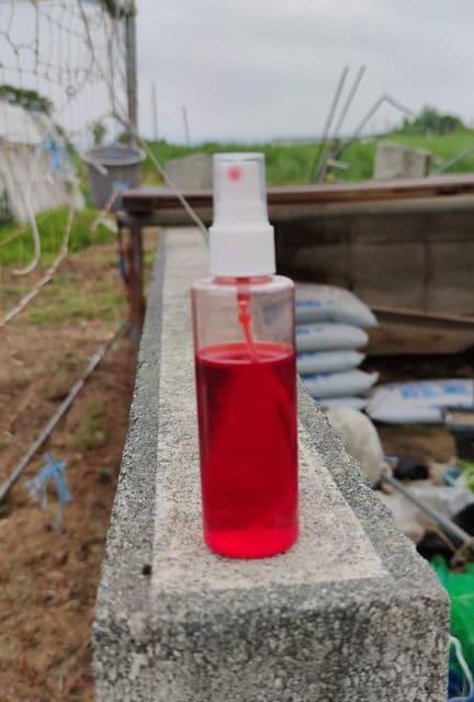と は トーン トマト トマトトーン噴射+二本仕立て プチトマト水耕栽培