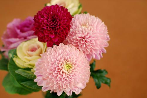 菊と葉牡丹