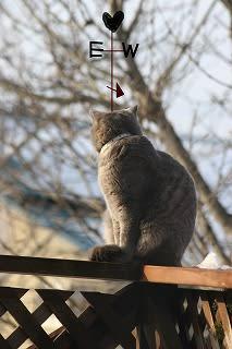 鳥見猫 木枯らしにゃん次郎が 来た